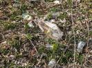 Bieszczadzkie śmieci